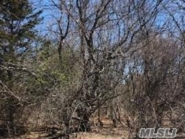 Lovely flat wooded half acre parcel in the beautiful Corey Creek Estates. Walk to water! Boat ramp access within walking distance at end of road. See attached survey.