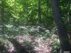 2 Acre lot in Nissequogue Village w/Winter Water-view!!!